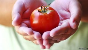 Tomatoes 'important in prostate cancer prevention' – BBC News