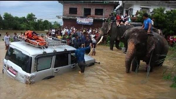 Ελέφαντες διέσωσαν 600 ανθρώπους από πλημμύρες στο Νεπάλ | naftemporiki.gr